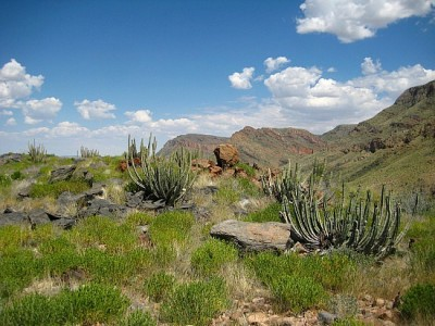 4_1238677620_cacti-higher-up-in-the-mountain.jpg